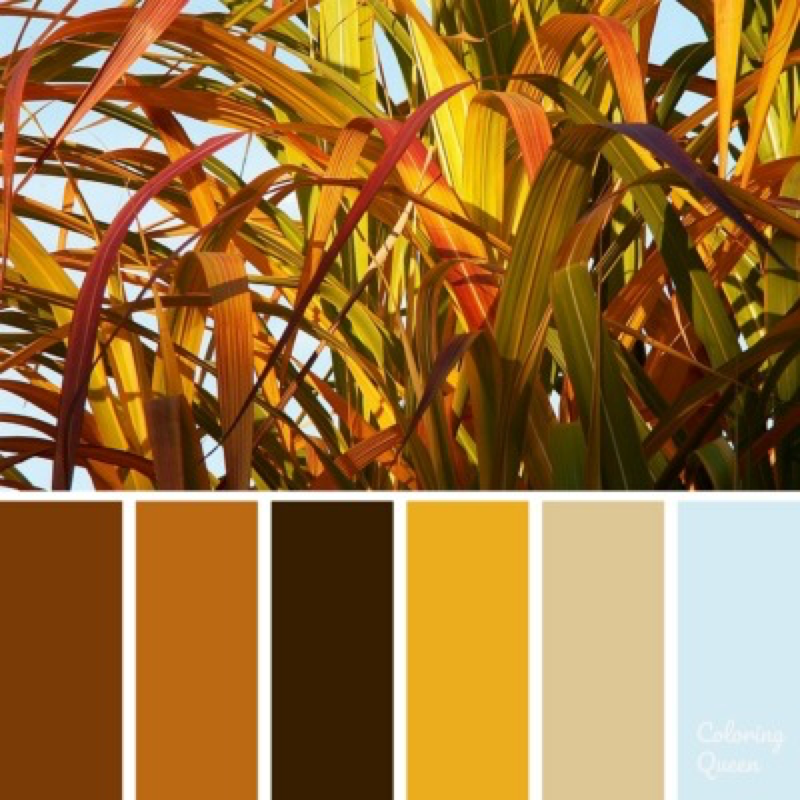 Grasses Color Scheme