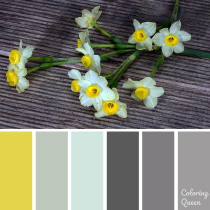 Daffodils with yellow centre color palette