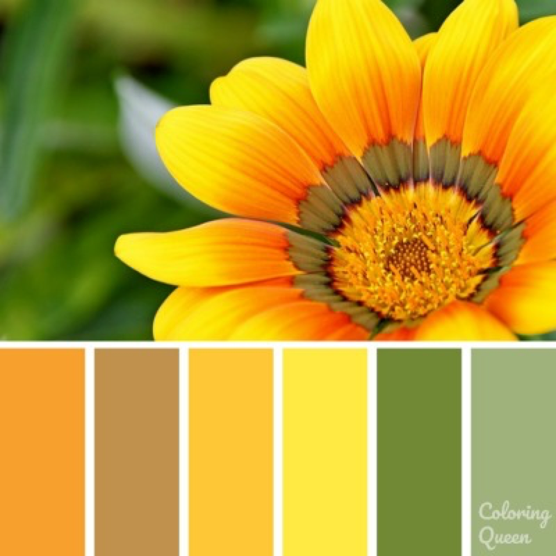 Yellow Daisy Color Scheme