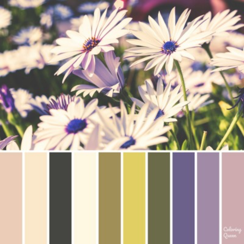 White Daisy with Blue/Purple centre color scheme