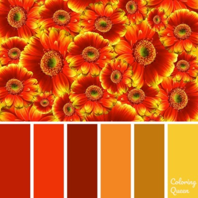 Bunch of red/orange and gold gerberas color scheme