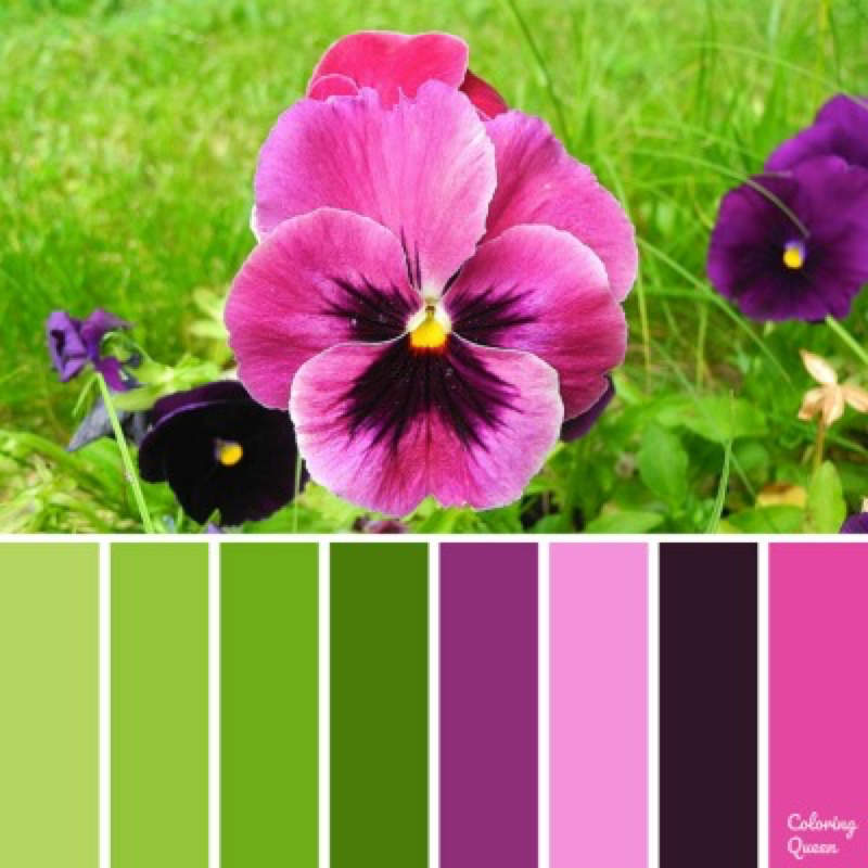 hot pink pansy color palette
