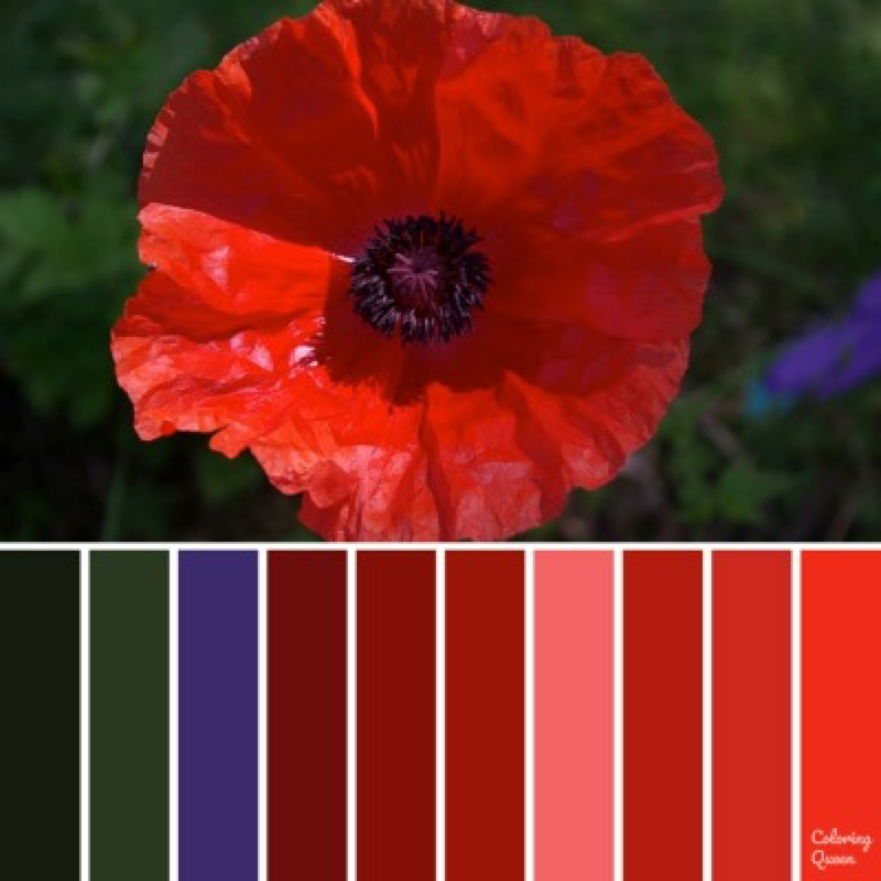 Red Poppy color scheme