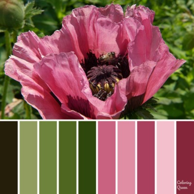 Pink poppy color scheme