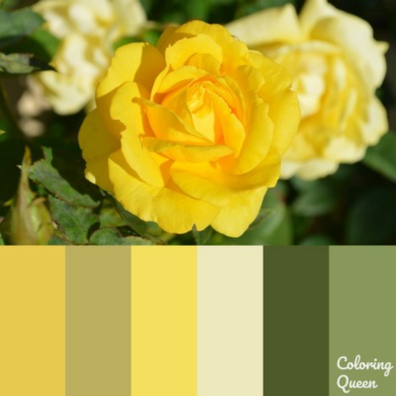 Yellow Rose color scheme
