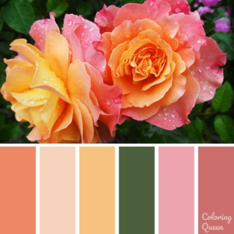 Pink and yellow roses color scheme