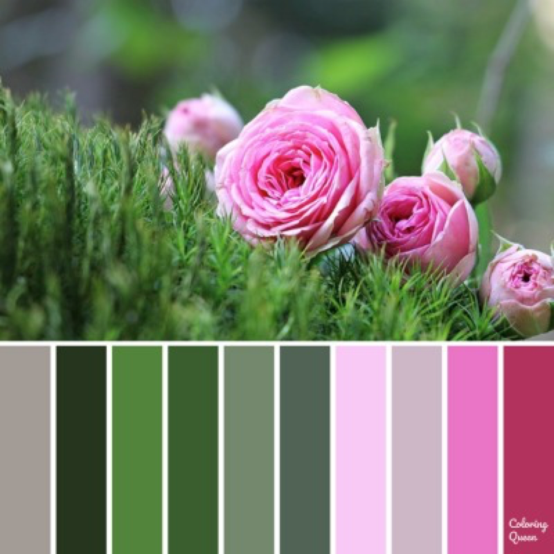Pink Rose color palette