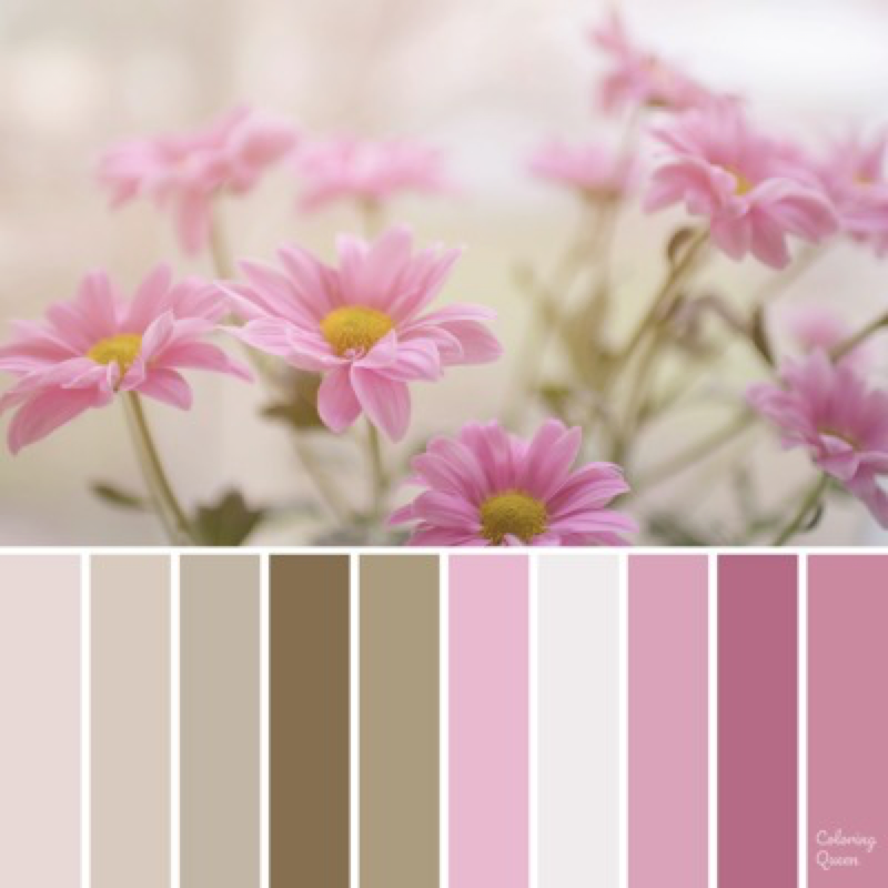 Pink daisy color scheme