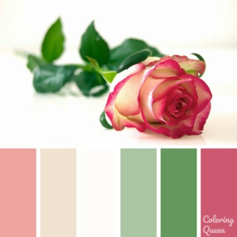 Two toned pink and cream rose color palette