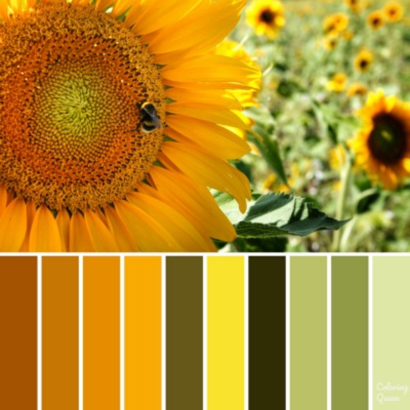 Sunflower color scheme