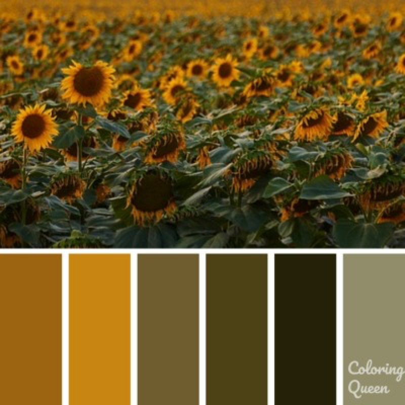 Field of Sunflowers color scheme