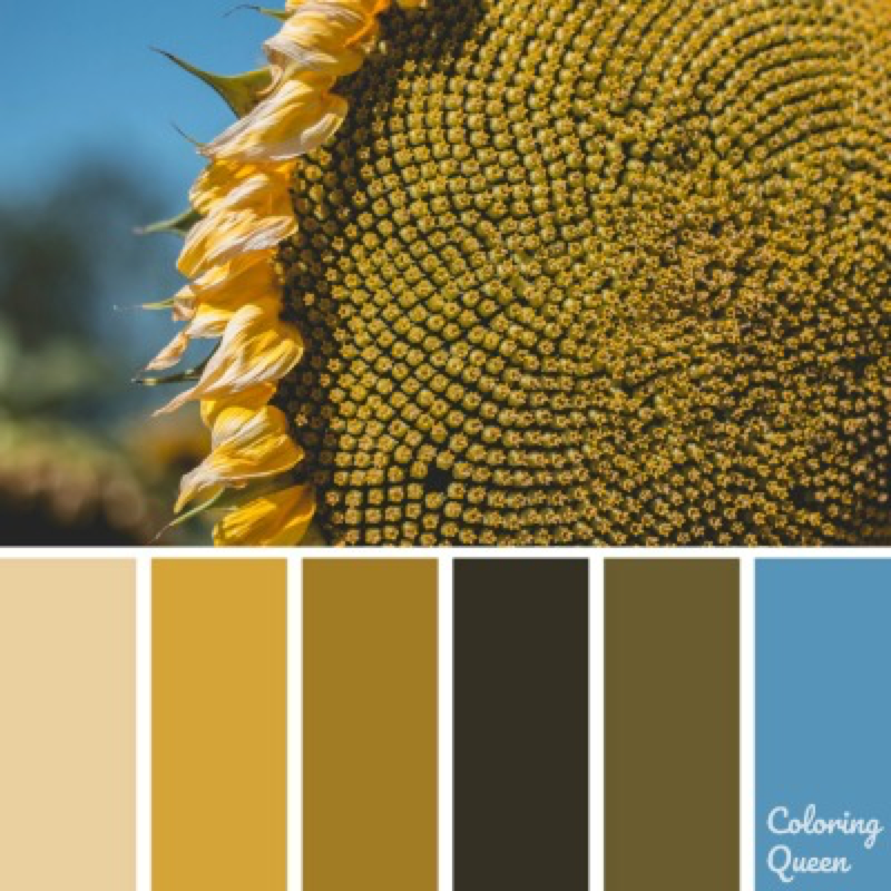 Close up of Sunflower centre color palette