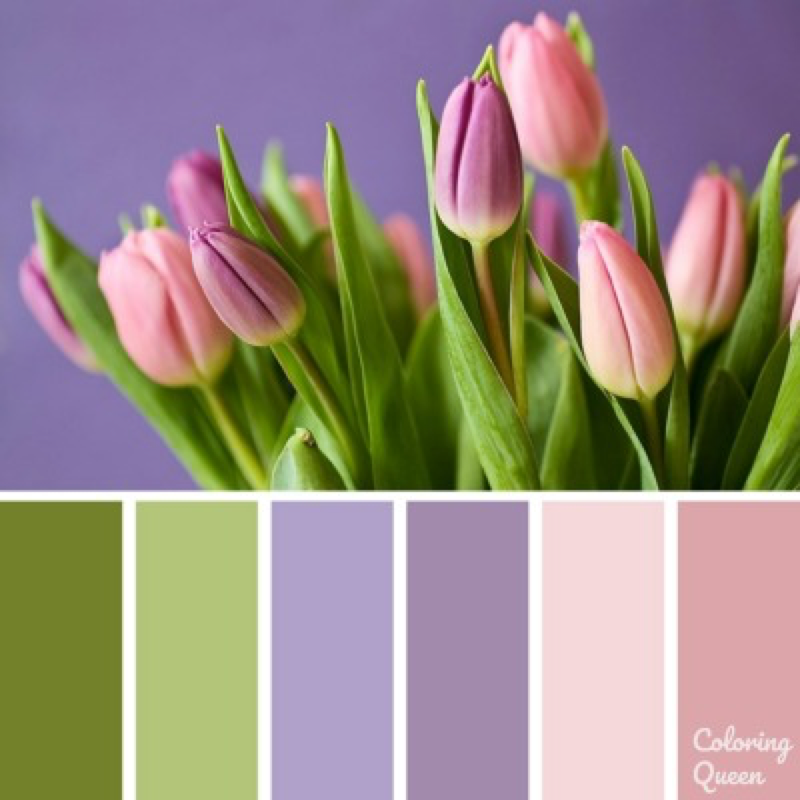 Pink Tulips color scheme