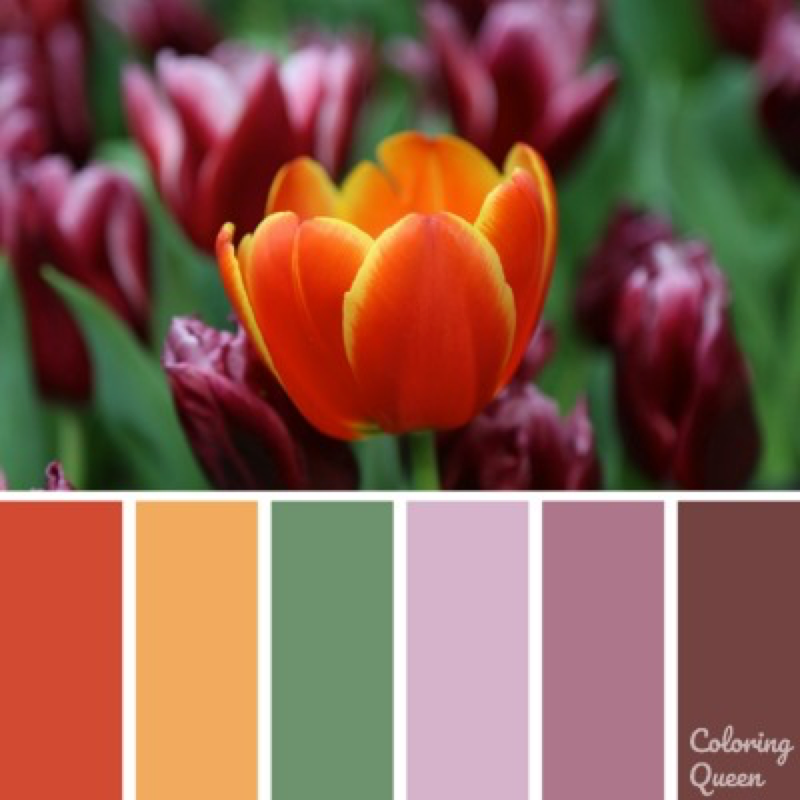 Orange and deep purple tulips color scheme