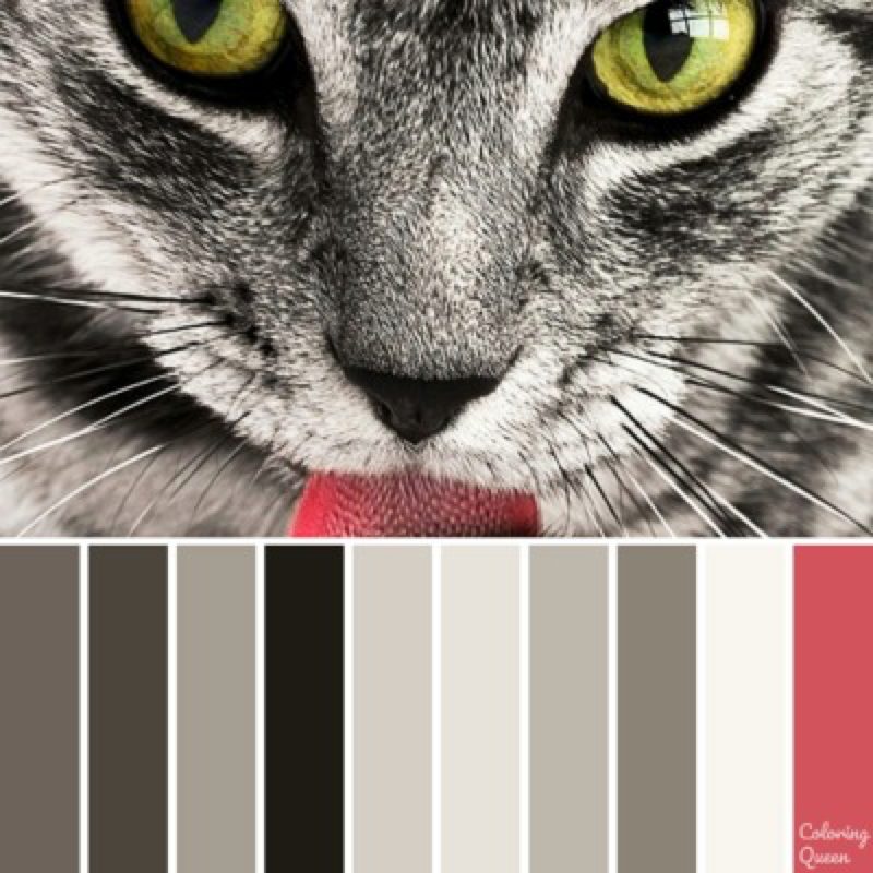 Tabby cat color scheme