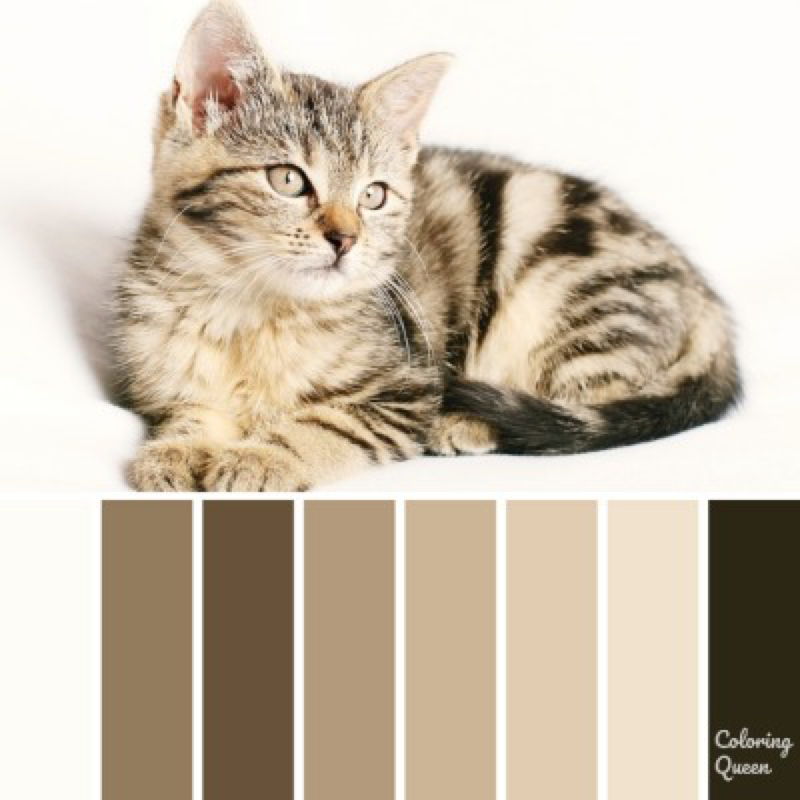Tabby cat kitten color scheme