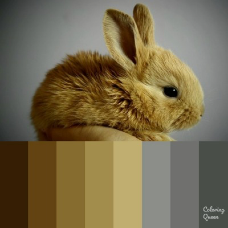 Small light brown bunny color palette