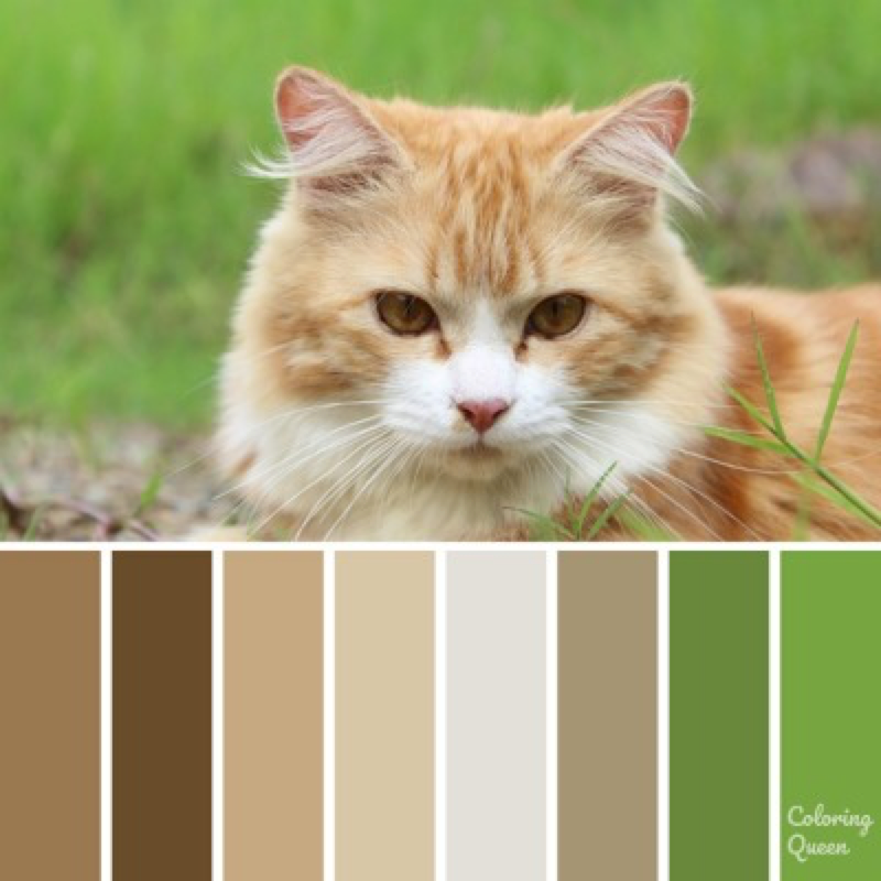 Ginger and white cat color scheme