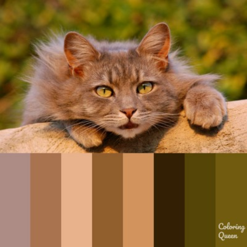 Brown/Tan cat color scheme