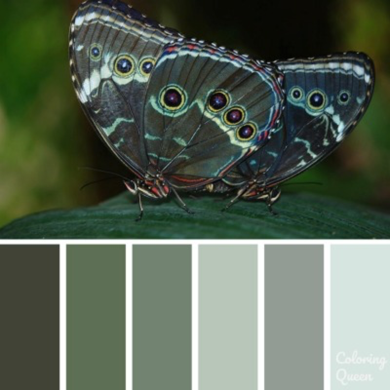 Green/grey butterfly color palette