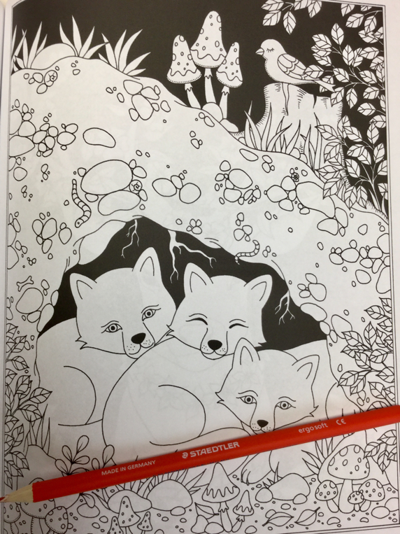 woodland animals coloring book 4864 - Woodland Animals Coloring Book Review