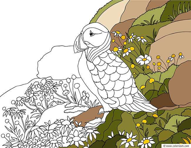Atlantic Puffin Bird Coloring Page