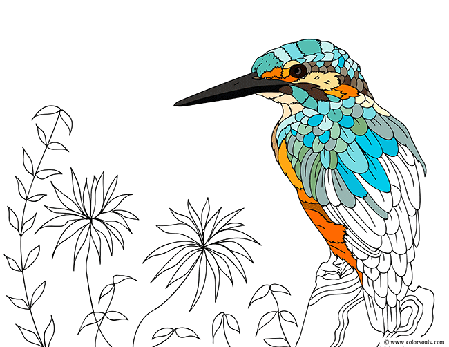 Kingfisher On A Tree Coloring Page