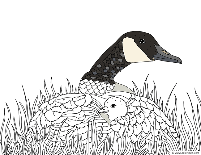 Duck And Duckling Coloring Page A Mama Showering Her Love To Little New Born At The Grassland Field