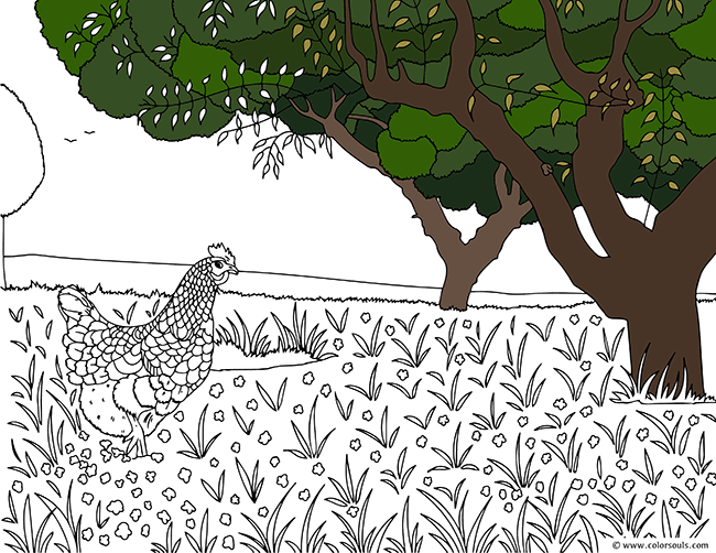 chicken in farm free coloring page