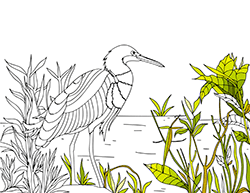 Similar Bird Coloring Pages