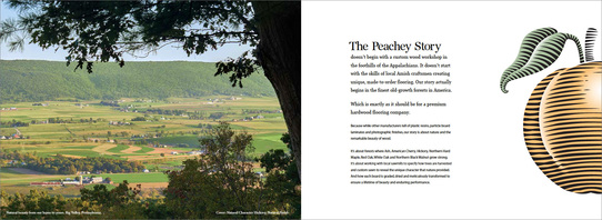 Peacheysplashbookstory