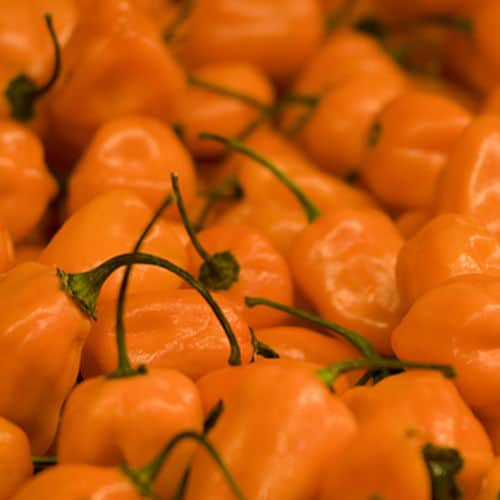 Habanero peppers closeup