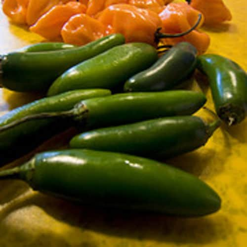 Serrano pepper recipes