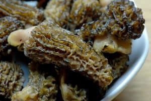 Sous vide ribeye morel mushrooms