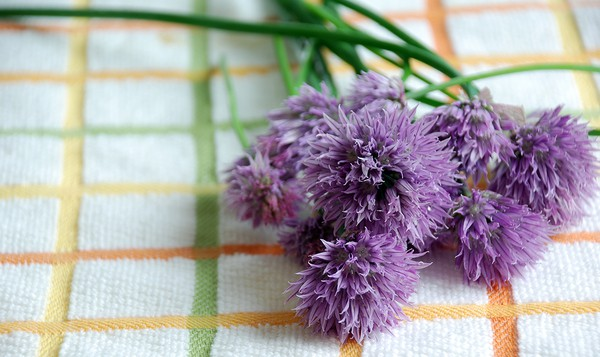 Chive bloosom infused vinegar chives