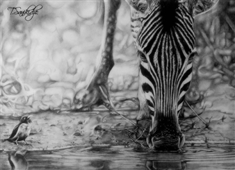 Tiko Sanikidze - Zebra Pencil on Paper, Drawings