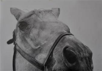 Dino Rinaldi - Sheldon #2 Graphite on Paper, Drawings