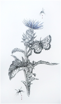 Stephanie E. Graham - Cardoon Pen on Paper, Drawings