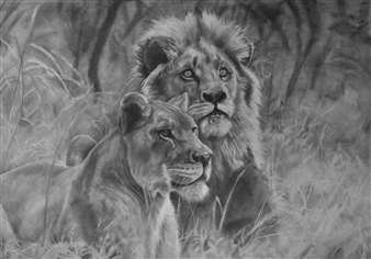 Dino Rinaldi - Lions Graphite on Paper, Drawings