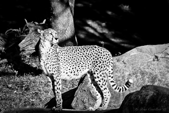 Bree Castillau - Surveying the Savannah Digital Photography, Photography