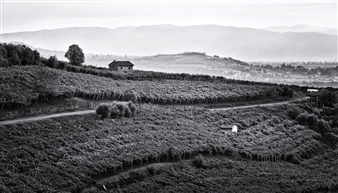 Charley Fazio - Land of Wine Black & White Digital Photography on Hahnemuhle Cotton Paper, Photography