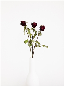 Steven Anggrek - Withered Roses In a White Vase II Photograph on Hahnemühle Paper, Photography