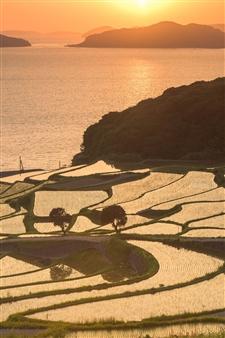 Olga Loschinina - The Rice Field Photograph on Plexiglass, Photography