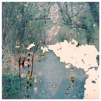 Mary Pearson - Biosigna, Untitled #2 Photograph on Fine Art Paper, Photography