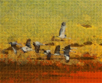 Howard Harris - Crane Sunset Digital Print on Aluminum, Digital Art