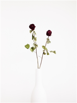 Steven Anggrek - Withered Roses In a White Vase I Photograph on Hahnemühle Paper, Photography