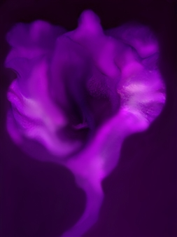 Rina Lazar - Purple Flower Archival Digital Print, Plexiglass Mount, Prints