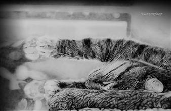 Tiko Sanikidze - Life is Beautiful Pencil on Paper, Drawings
