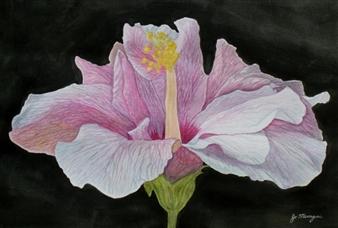 Josie Mengai - Pink Hibiscus Digital Print on Aluminum, Prints