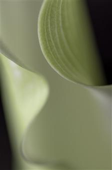 Kathleen Messmer - Waves Photograph on Aluminum, Photography
